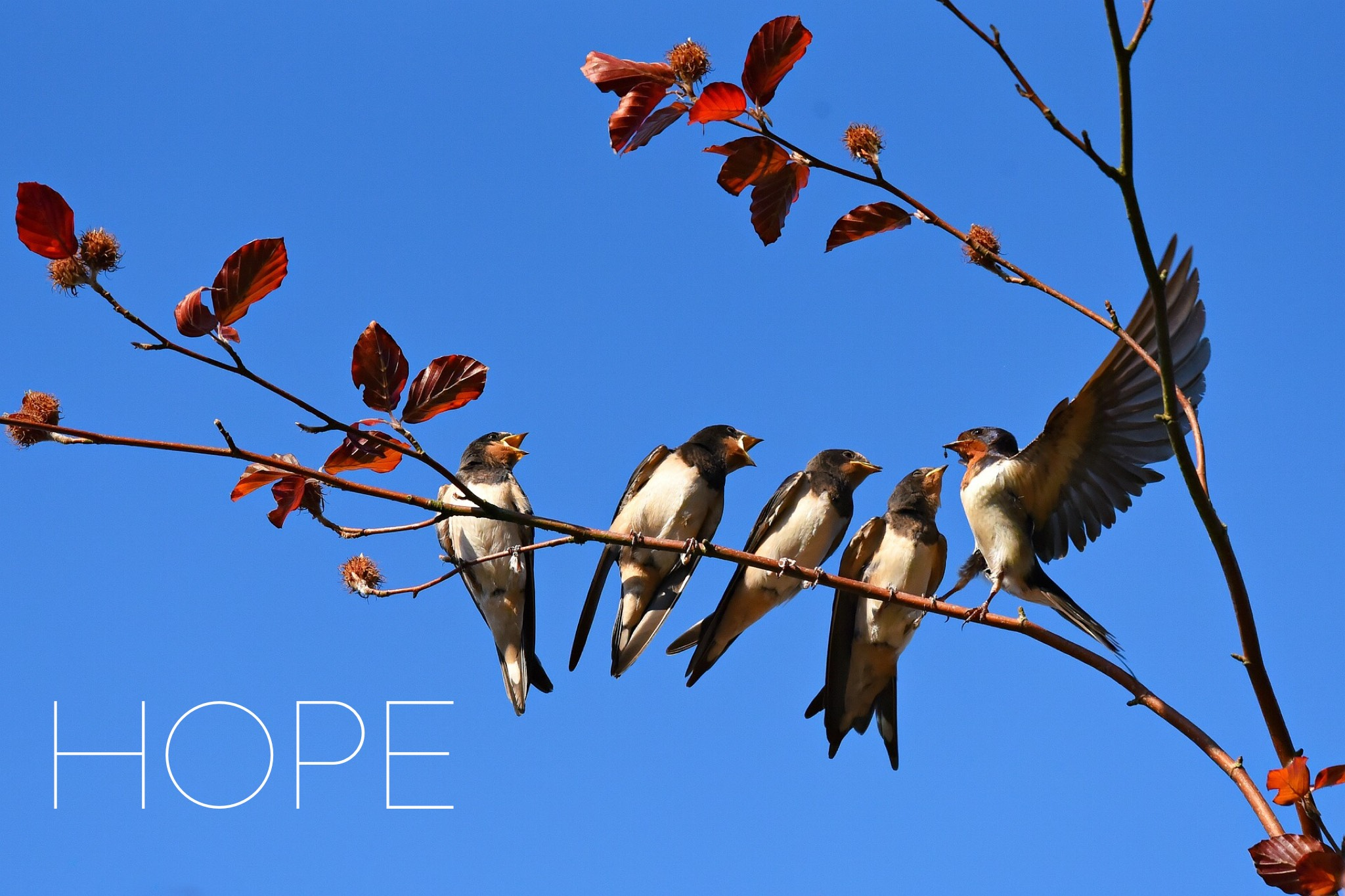Birds on a wire with Hope text