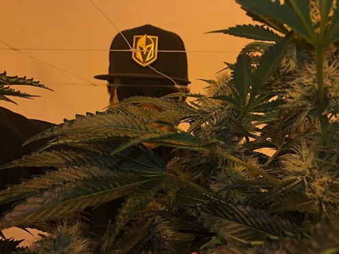 golden knights game day dispensary deals