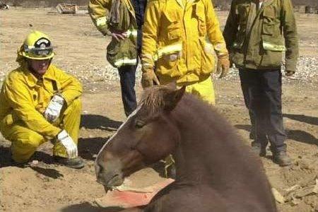 الحصان و البئر ! قصة حول تحقق الأهداف و تجاهل الأفكار المحبطة