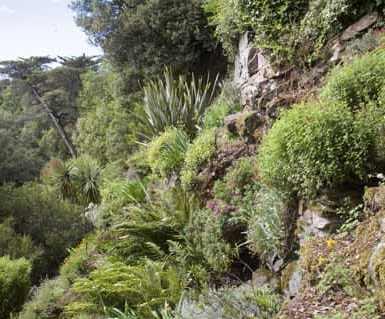 rocaille de plantes exotiques surplombant la rance