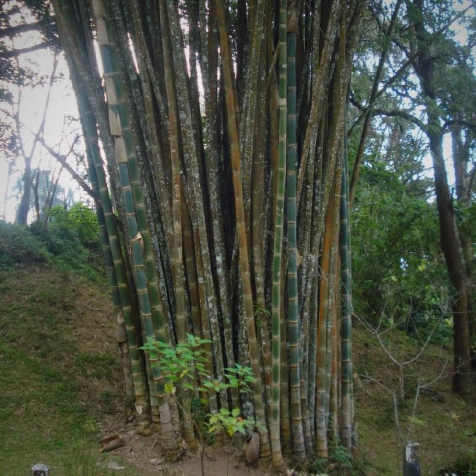 het garen wordt gemaakt van bamboe