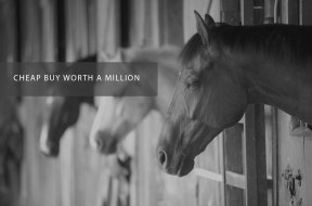 CHEAP BUY WORTH A MILLION
