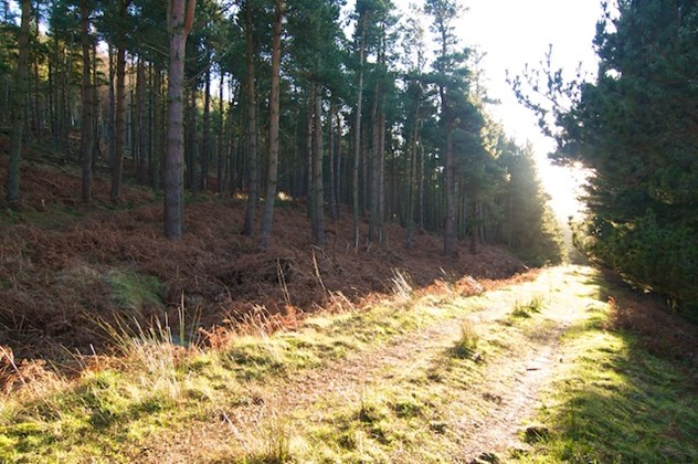 Harwood Forest hiking, Northumberland, Stablewood Coastal Cottages