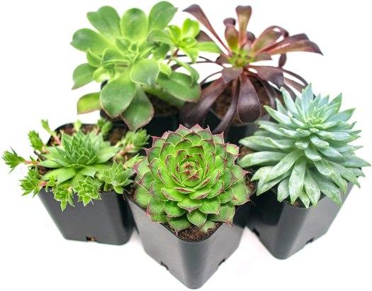 succulent plant garden