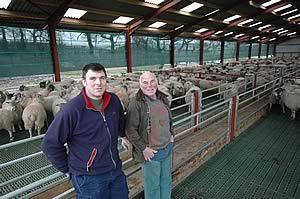 New Sheep Housing Provides Ideal Environment