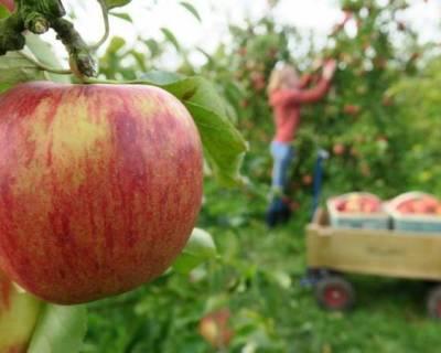Obstbauwissen auffrischen