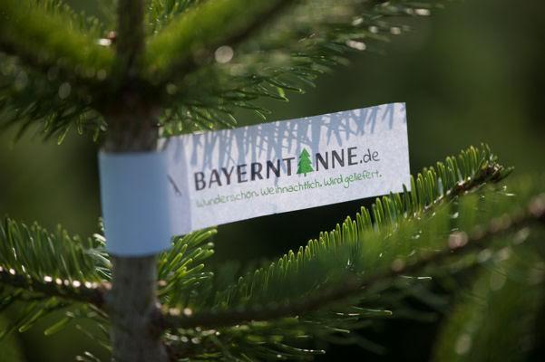 Bayerntanne Christbäume