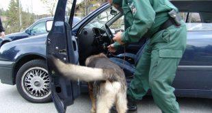 Sprengstoffhund Polizei München