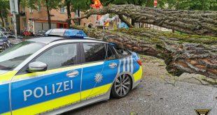Baum fällt auf Streifenwagen