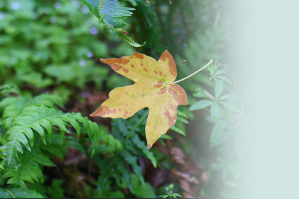 A single yellow leaf drops gently in front of green foliage.