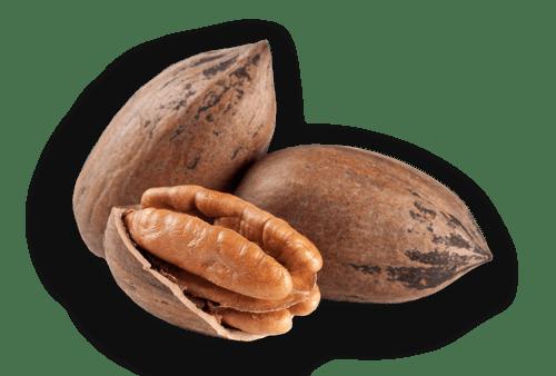 nut or drupe