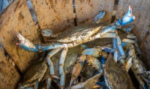 Italy news: Tourism warning as beaches invaded by dangerous crabs 'keep children away' | World | News