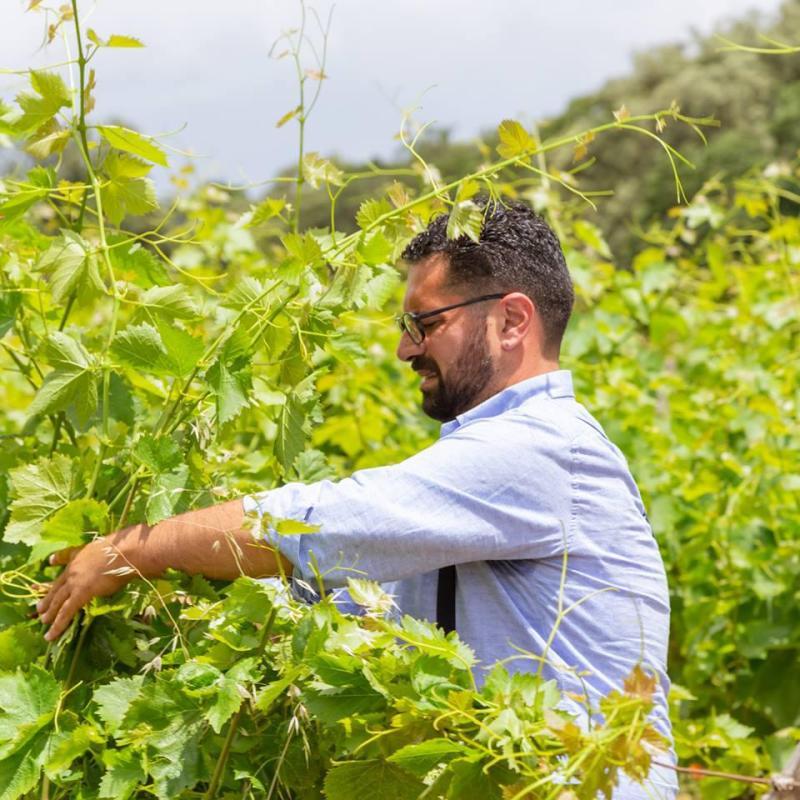 Giovanni Aiello Managing the Vines in the Vineyards