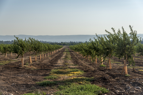 Masseria Fruttirossi to plant 40 hectares of avocado in Apulia -
