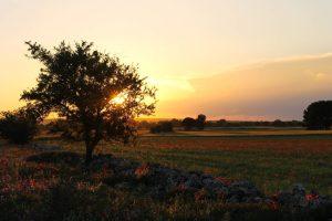 Solar-Konzept planning 800 MW of unsubsidized solar in southern Italy – pv magazine International
