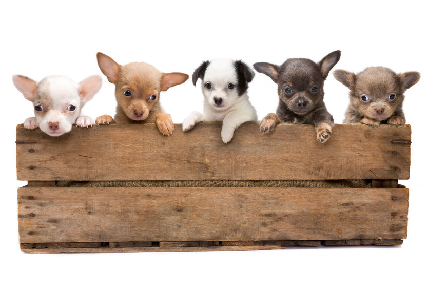 Stairs For DogsChoosing The Right Dog Crate 5 Different Types To Consider Stairs For Dogs