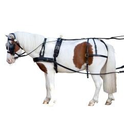 pony harnes [ 900 x 900 Pixel ]