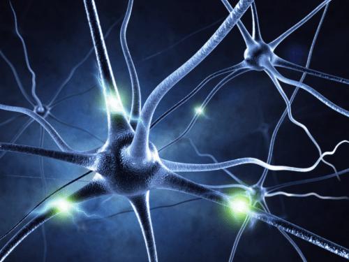 mozek, nervy