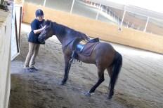 Lena med sin häst Noi