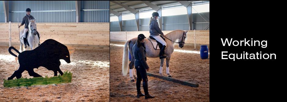 Working Equitation på Stall Alfhem