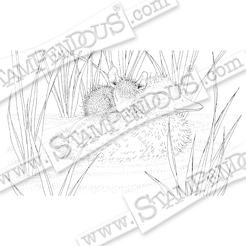 Ducky Nap Rubber Stamp