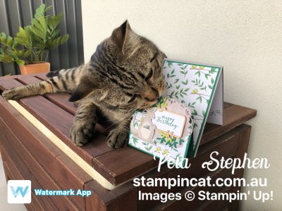 Stampin' Cat ESAD Animal Expedition Stampin' Up!