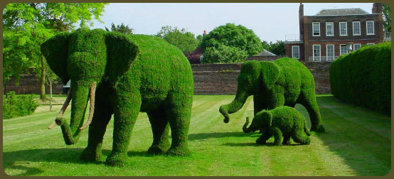 Elephant family of trees!