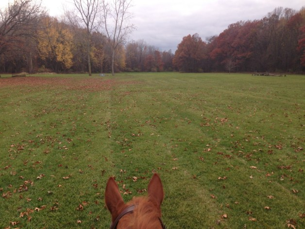 The leaves are all disappearing in the field!