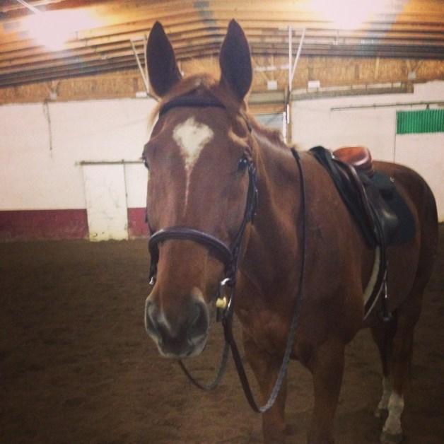 He looks so handsome in tack!
