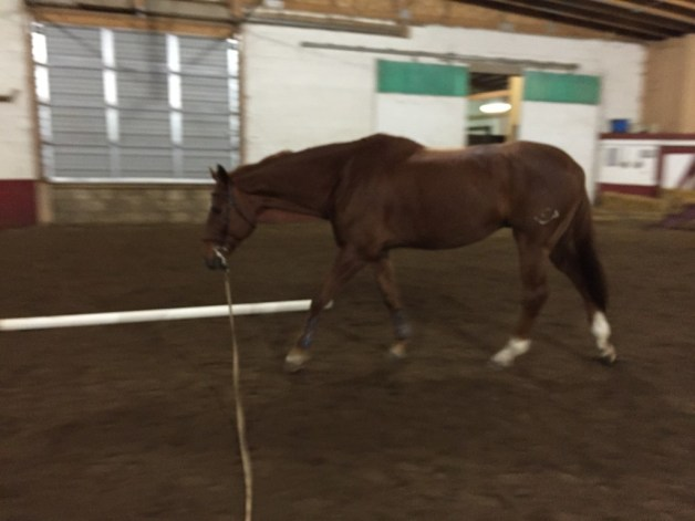 Walking on the lunge
