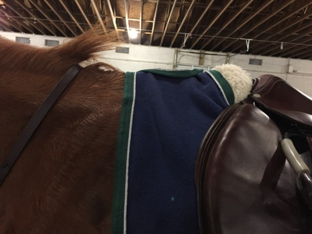 After ride shot of how the sheet sits on P's withers