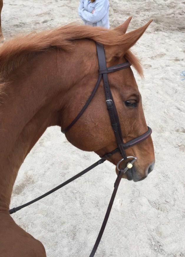 Sooo, Im a riding horse again?