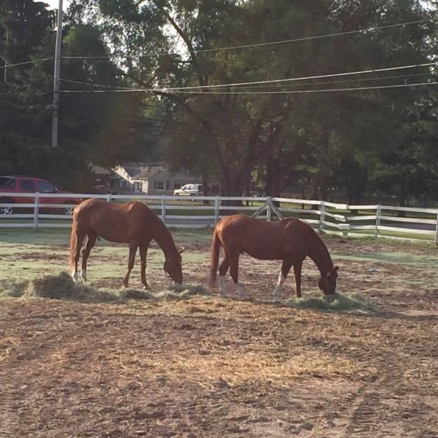Happy ponies