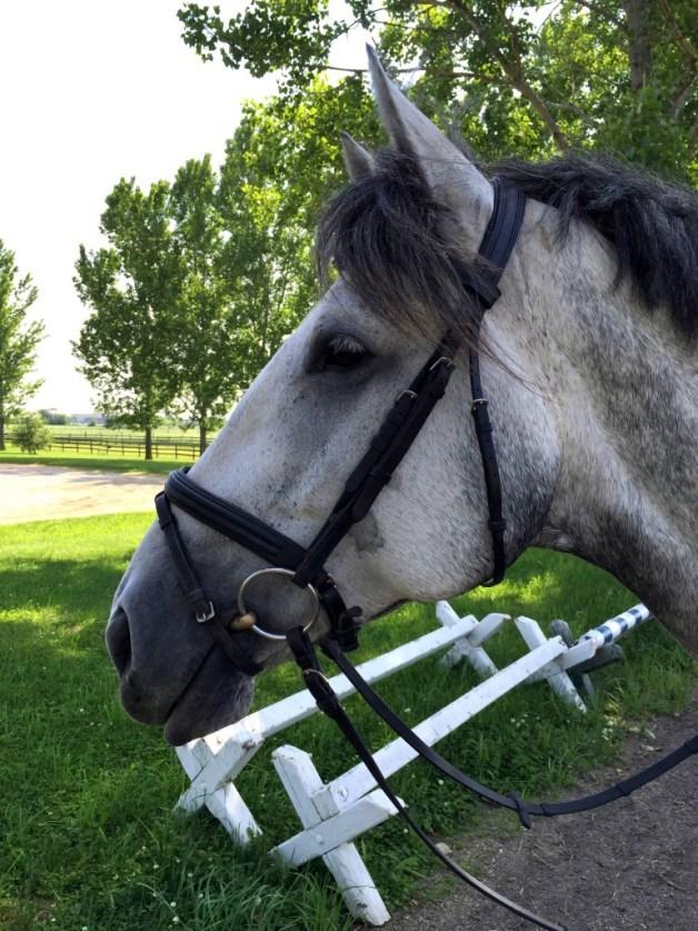 Pretty mare face