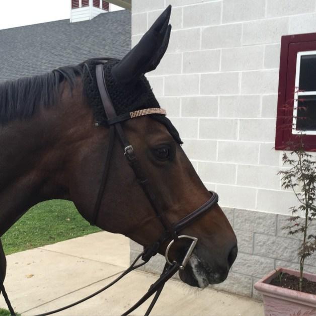 Profile shot of the mare