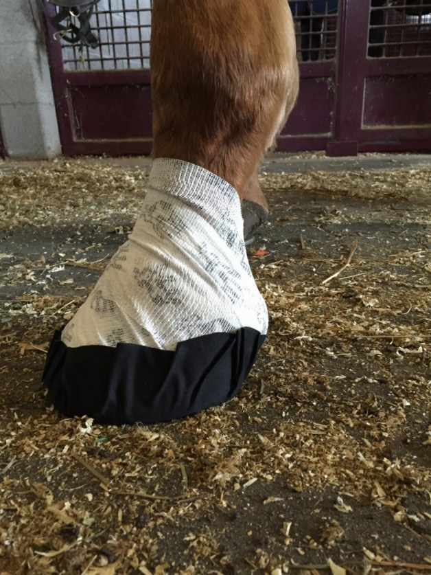 The reason I could do a good review on the Equifit Hoof Wraps