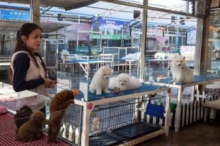 Beijing Dog Market