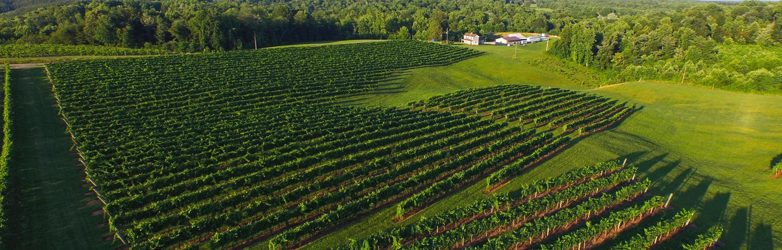 vineyard_aerial