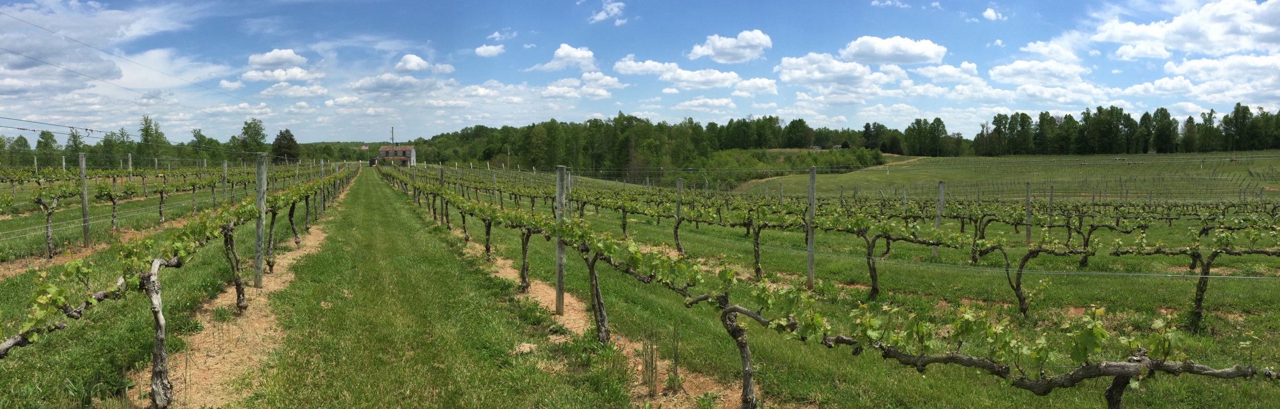 vineyard_wideangle