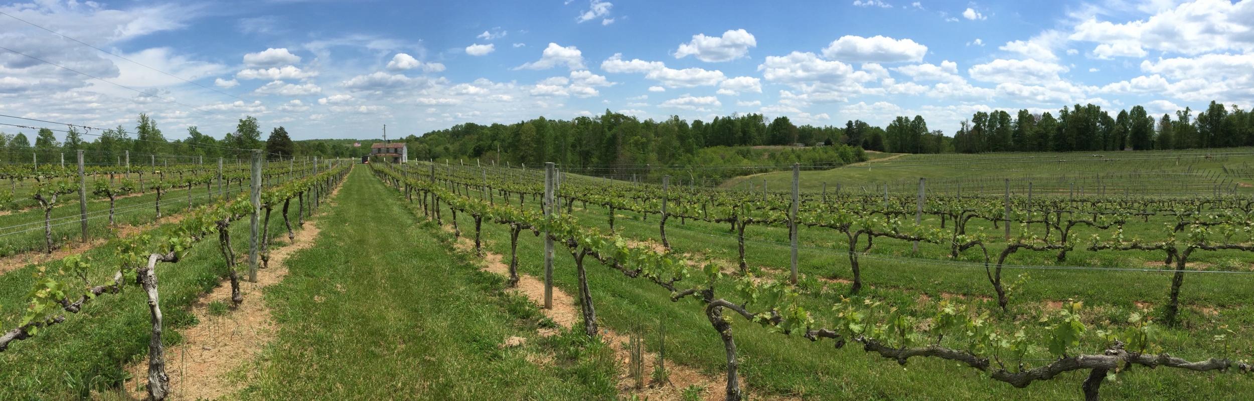 vineyard_wideangle