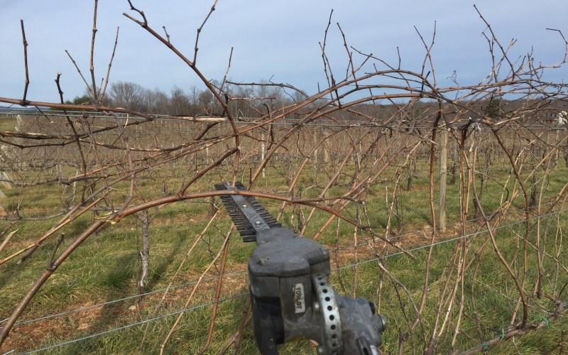 Rough Pruning