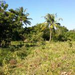 4.5 Acres Beach Plot For Sale in Shimoni