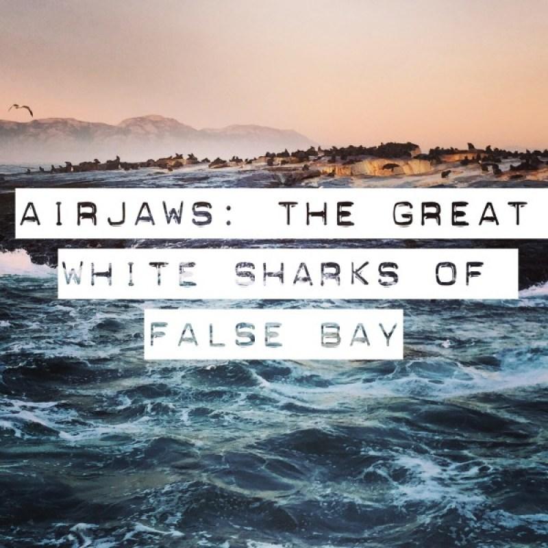 Great White Sharks False Bay