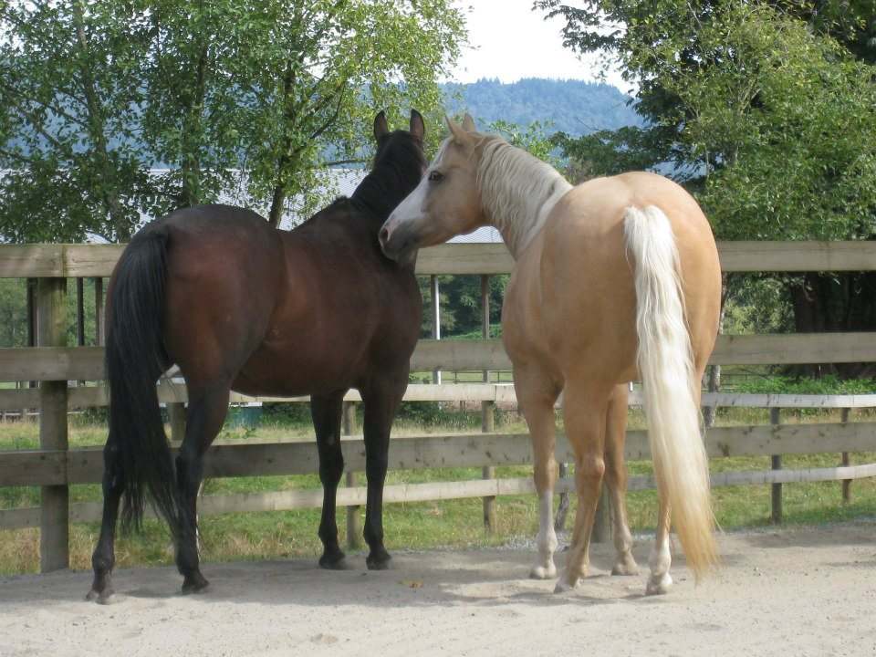 Fearless Horsemanship course working with horses