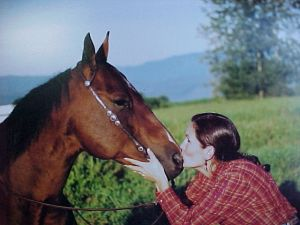 Free report build confidence with your horse