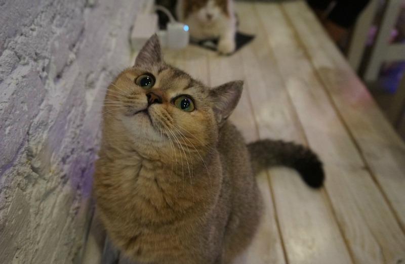 Katzencafés in Duitsland