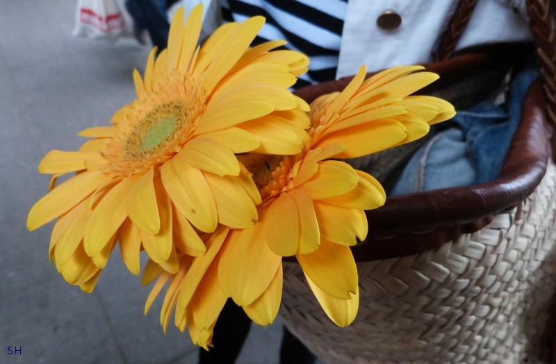 Zonnebloemen op de markt - Standort Hamburg