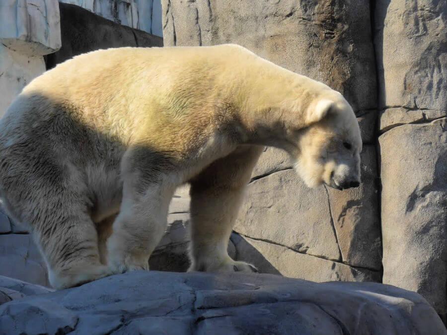 Zoo Hamburg: het Eismeer