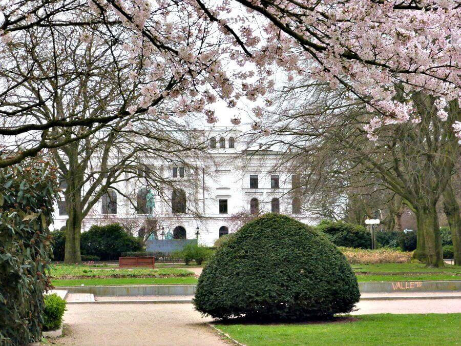 Lentebloesem aan het Altonaer Rathaus