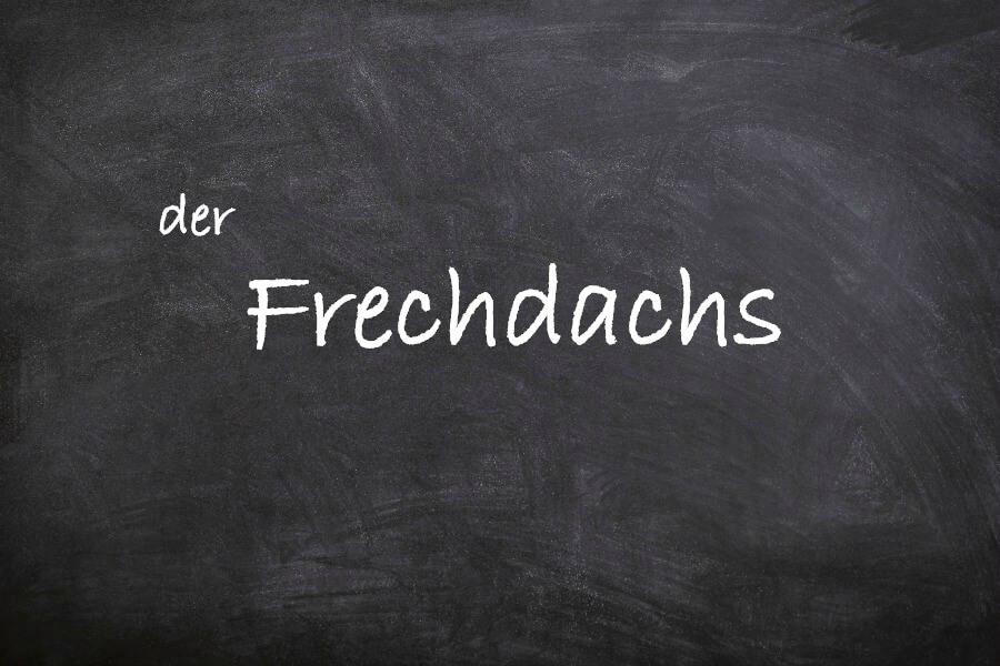 Favoriete Duitse woorden: der Frechdachs